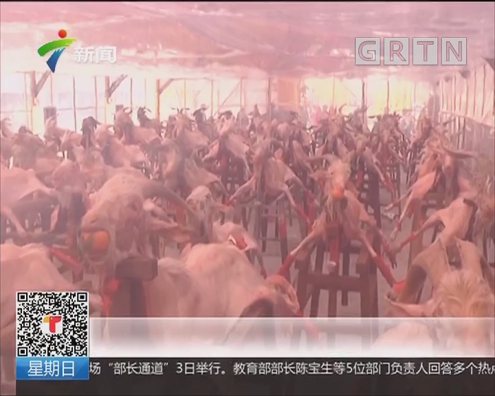 """揭阳硕联村正月十六年俗:""""摆猪羊""""感恩富足兆丰年"""