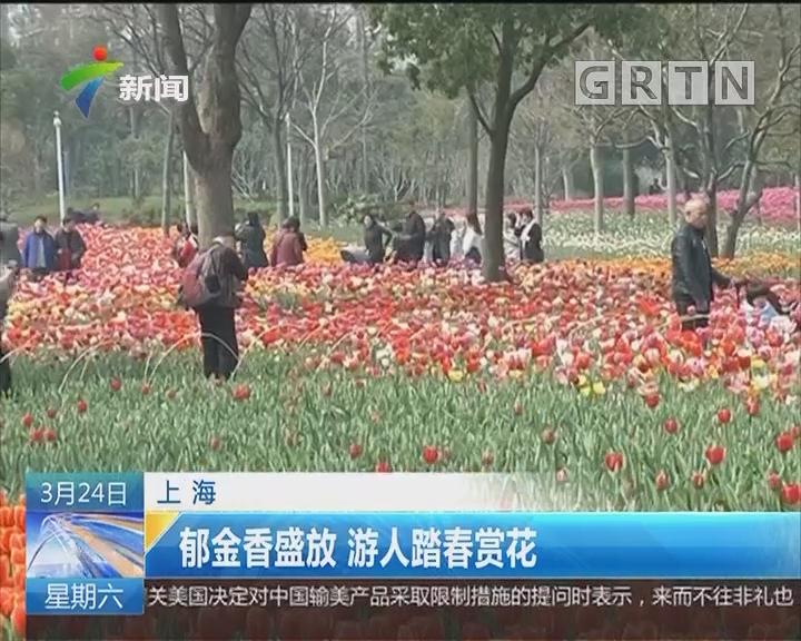 上海:郁金香盛放 游人踏春赏花
