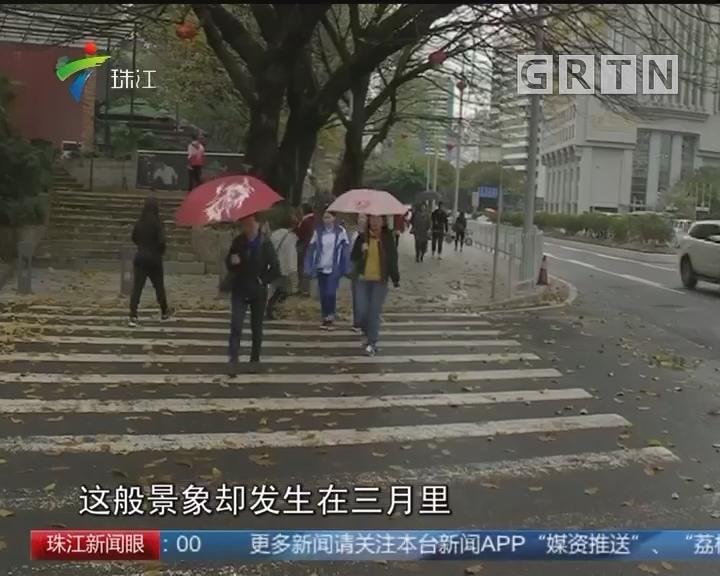 花城三月飘黄叶 专家:正常生物现象