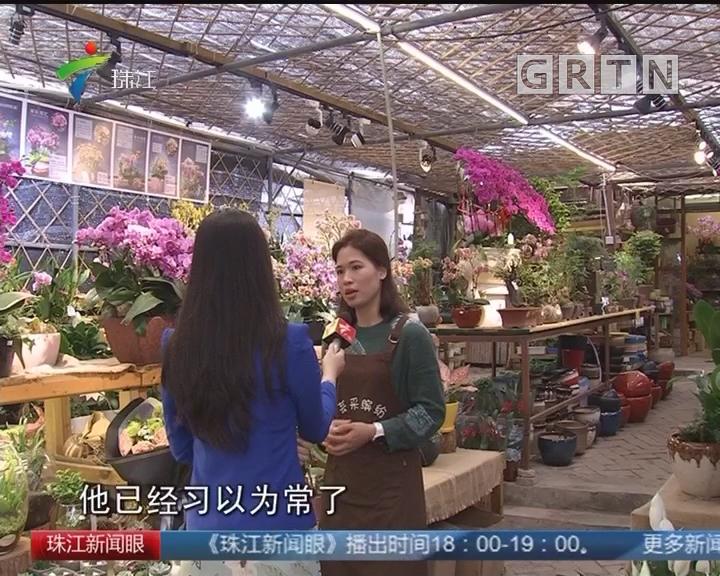 《老珠江 新花事》:传统花市 广州名片