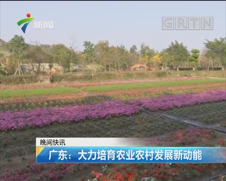 广东:大力培育农业农村发展新功能