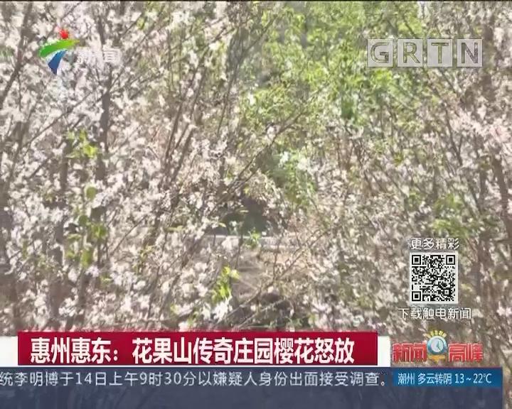 惠州惠东:花果山传奇庄园樱花怒放