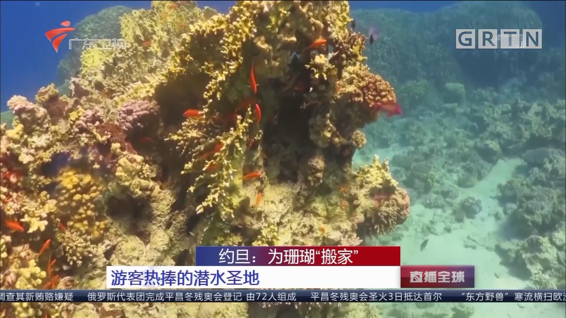 """约旦:为珊瑚""""搬家""""游客热捧的潜水圣地"""
