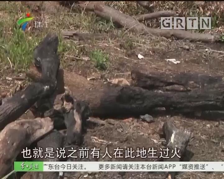 广州:大学城两处湿地公园开放 问题有点多