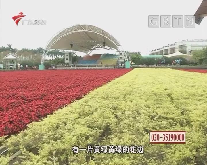 美丽乡镇 花开富贵之广州海棠花