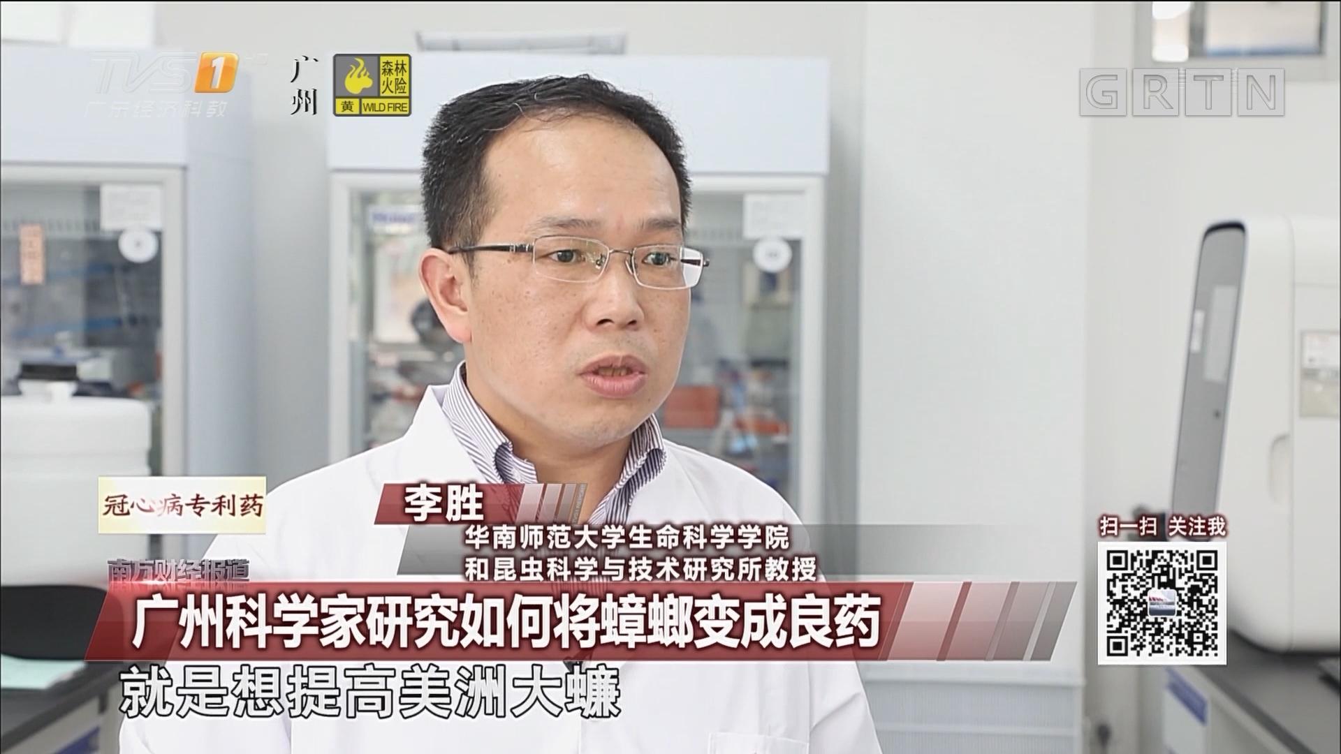 广州科学家研究如何将蟑螂变成良药