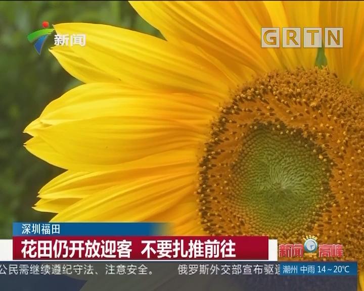 """深圳福田:游客赏花变折花 大片葵花""""很受伤"""""""