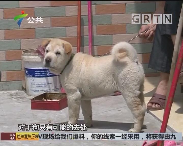惠州:面包车停家门口 狗只瞬间被套走