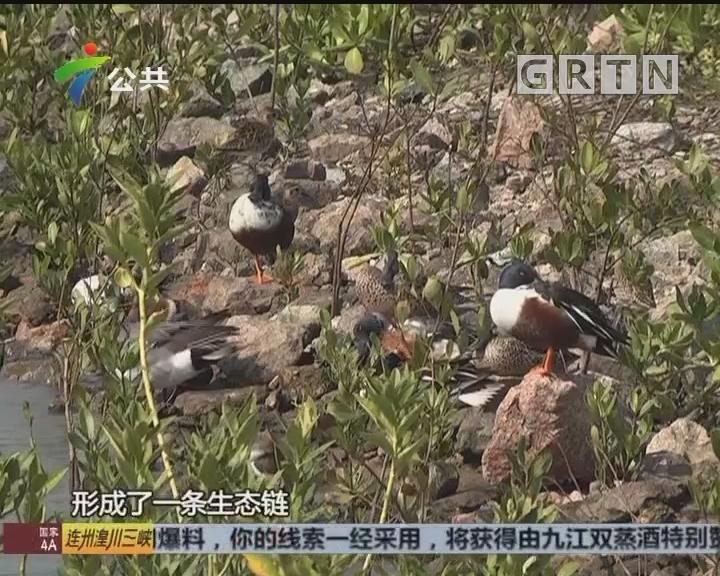 深圳:禁渔区摸捕水产 严重者将构成犯罪