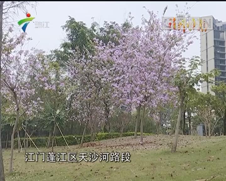 阳春3月 花开岭南