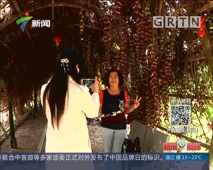 广东:春日暖阳 引游客踏春赏花