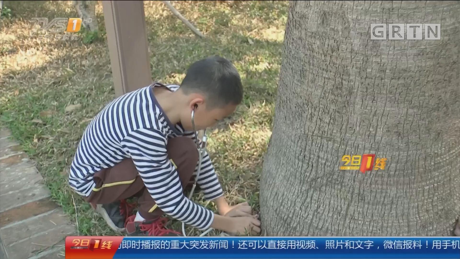 """东莞南城:聆听树的""""心跳"""" 与大自然亲密接触"""