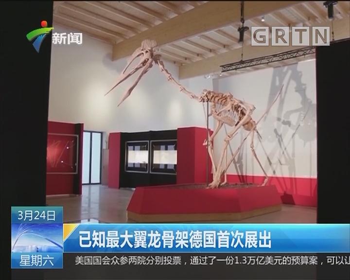已知最大翼龙骨架德国首次展出