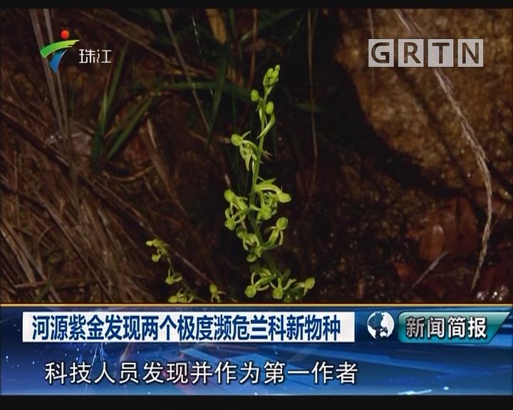 河源紫金发现两个极度濒危兰科新物种