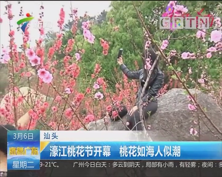 汕头:濠江桃花节开幕 桃花如海人似潮