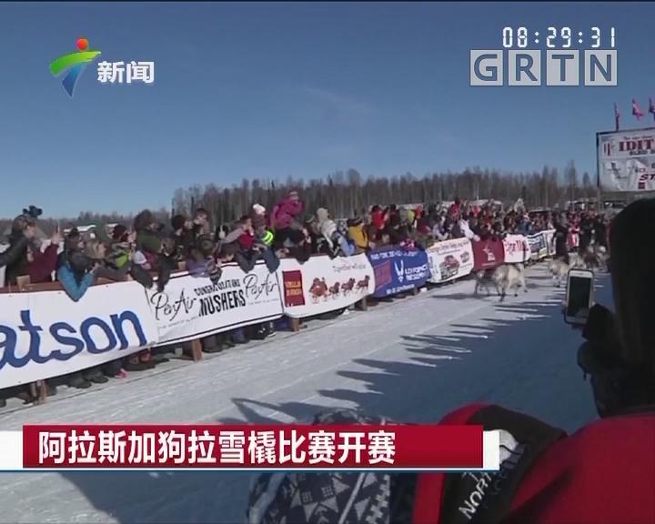 阿拉斯加狗拉雪橇比赛开赛