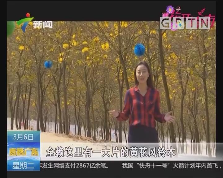 中山:层林尽染黄金甲 云梯山风铃正盛