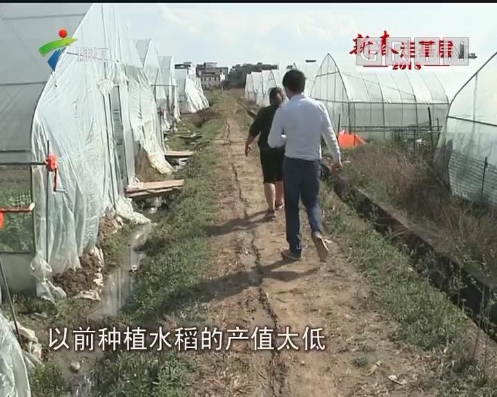 记者体验春耕:农民种菜脱贫 土地产值翻10倍
