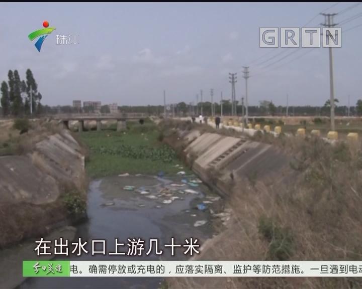 吴川:屠宰场违法排放粪水 大片农作物受损
