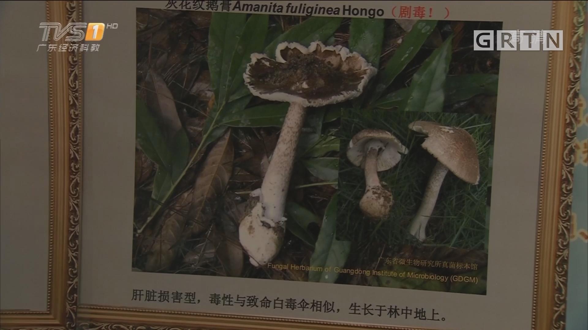 分辨毒蘑菇:毒菇颜色越鲜艳毒性越强? 专家释疑