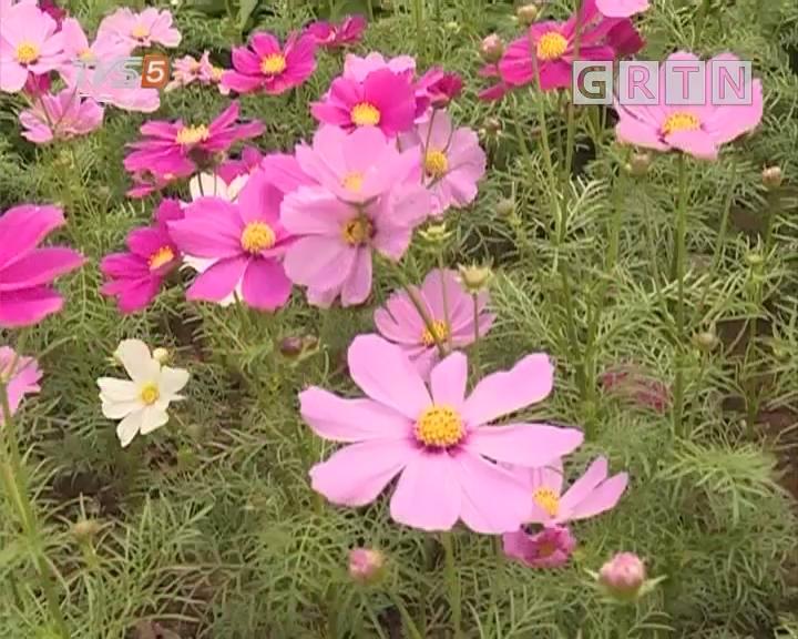 [2018-03-30]南方小记者:赏花专列 开往春天
