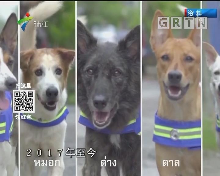 泰国13个府被列为狂犬病高发区