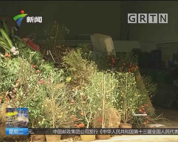 广州:年花废弃量激增 环卫工人加班处理
