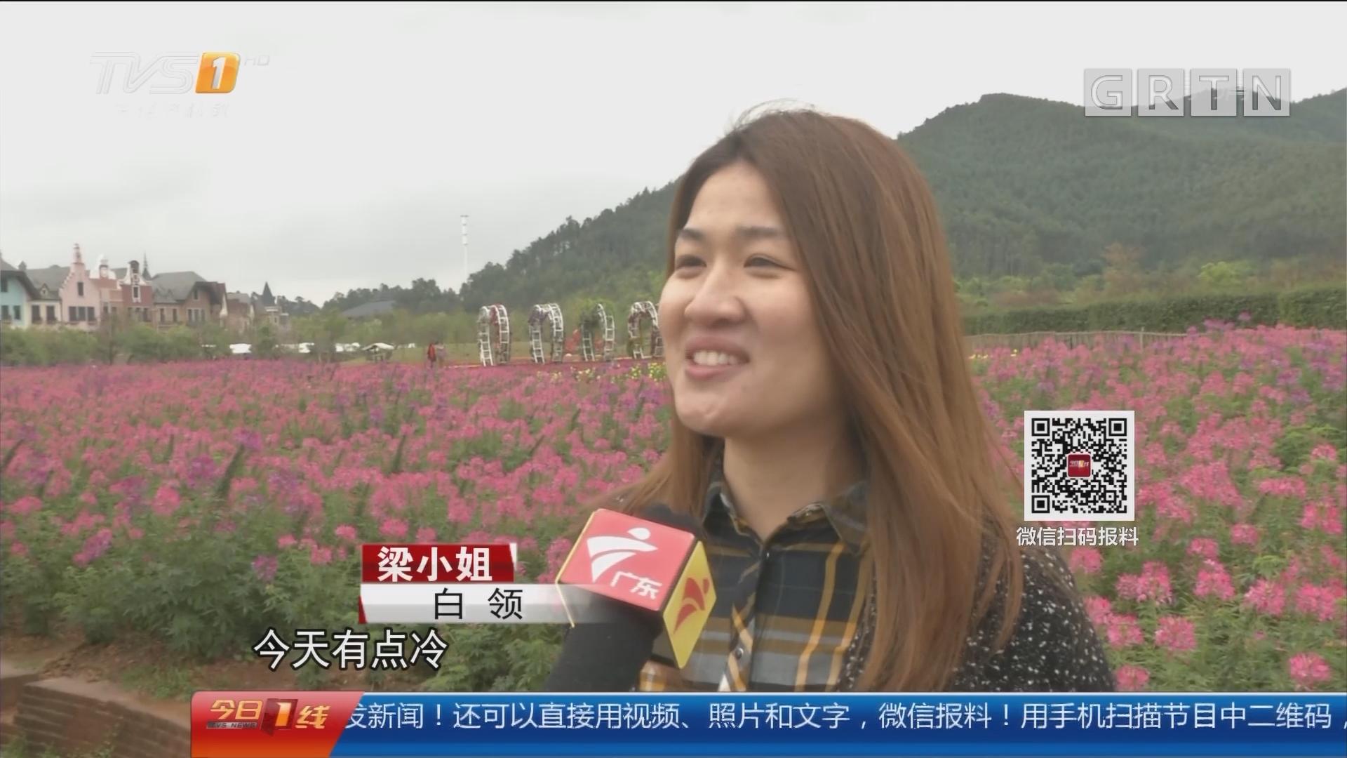 """佛山高明:白领丽人 学咏春庆""""三八"""""""