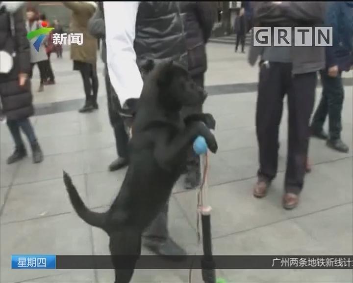 狗狗献计:狗狗脚踩滑板车 无师自通惹人爱