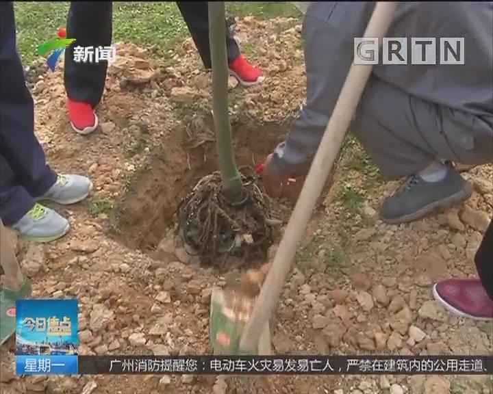 植树节:植树节义务植树 为城市增绿
