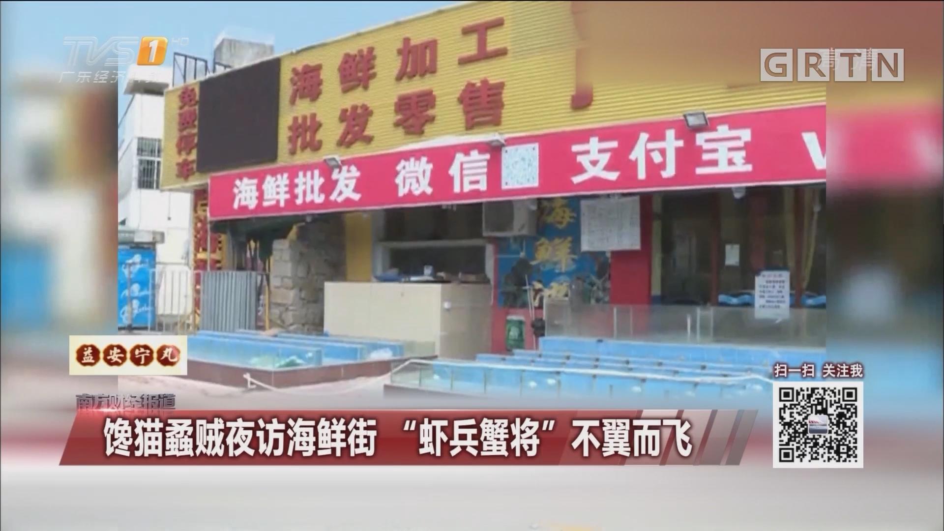 """馋猫蟊贼夜访海鲜街 """"虾兵蟹将""""不翼而飞"""