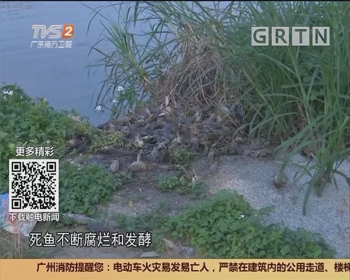 广州番禺:塘主推托 村委已着手处理