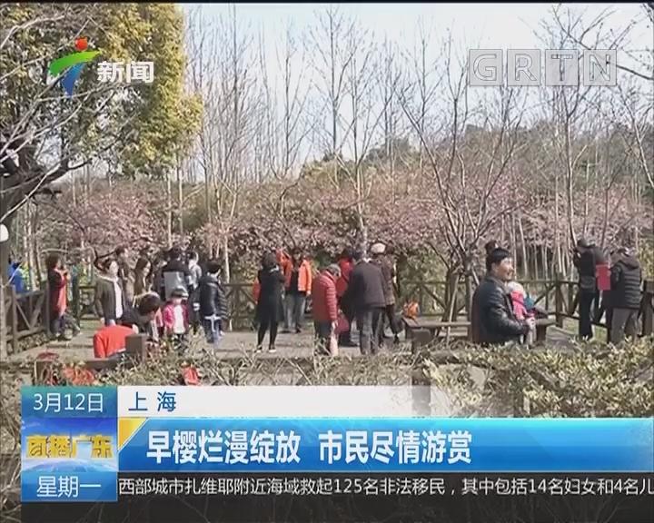 上海:早樱烂漫绽放 市民尽情游赏
