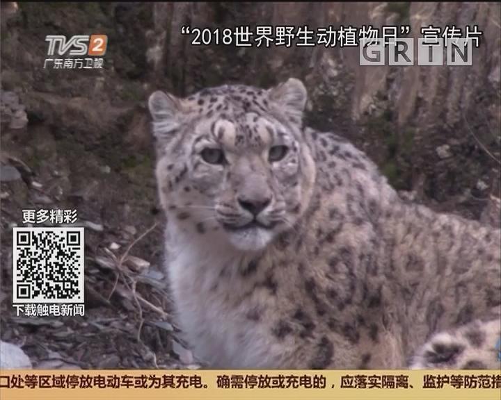 世界野生动植物日:保护虎豹等大型猫科动物 你我同行