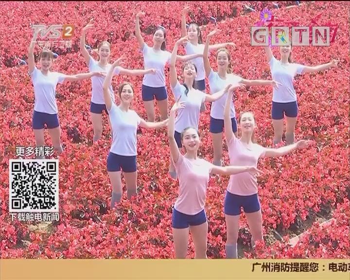 花开岭南:百万葵园紫荆争艳