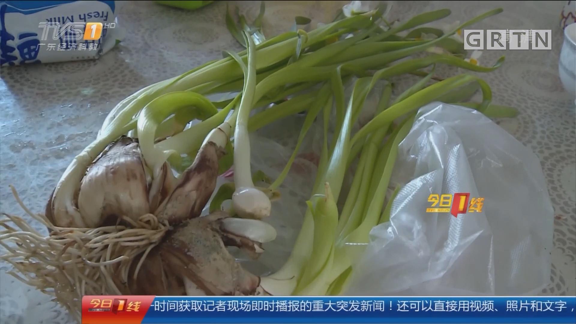 警惕误食水仙:水仙当蒜苗炒了吃 母女呕吐中毒