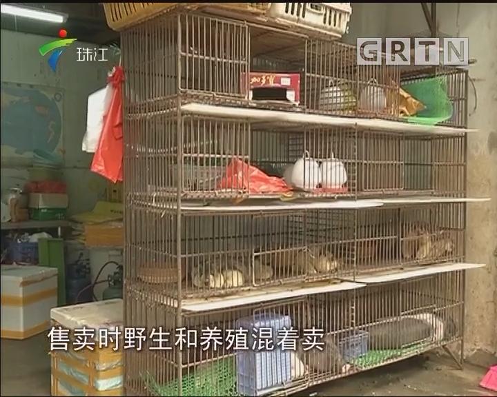 南海:市场公开售卖野生动物?执法部门介入