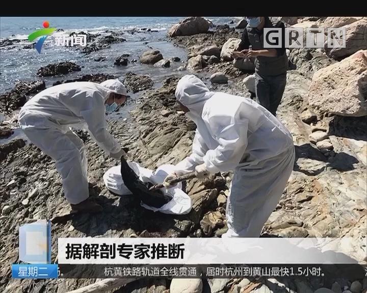 深圳大鹏新区:接连三只江豚死亡 背部疑留致命伤痕