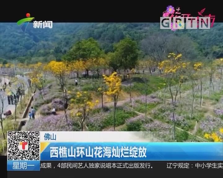 佛山:西樵山环山花海灿烂绽放