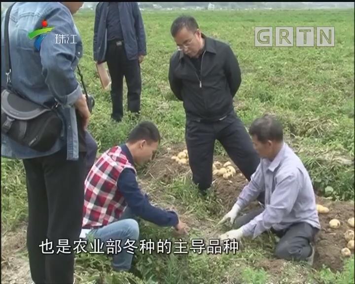 粤陇两省农科专家推广优质高产马铃薯品种