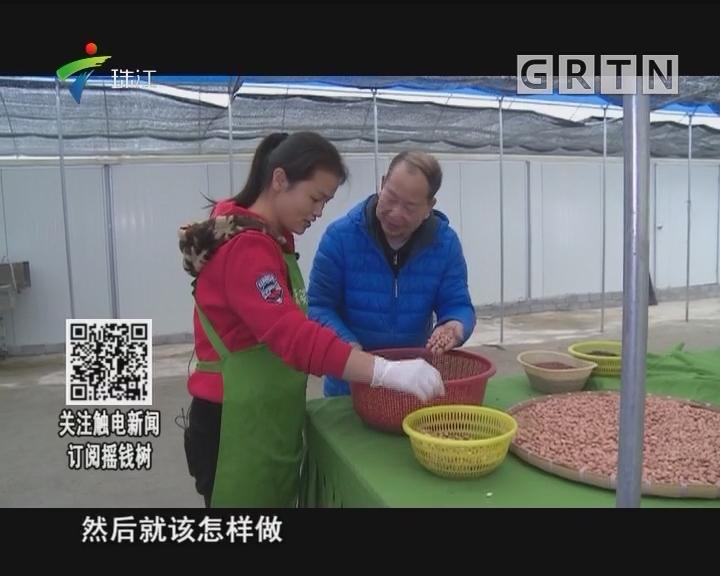 [2018-03-05]摇钱树:绿色芽菜受追捧