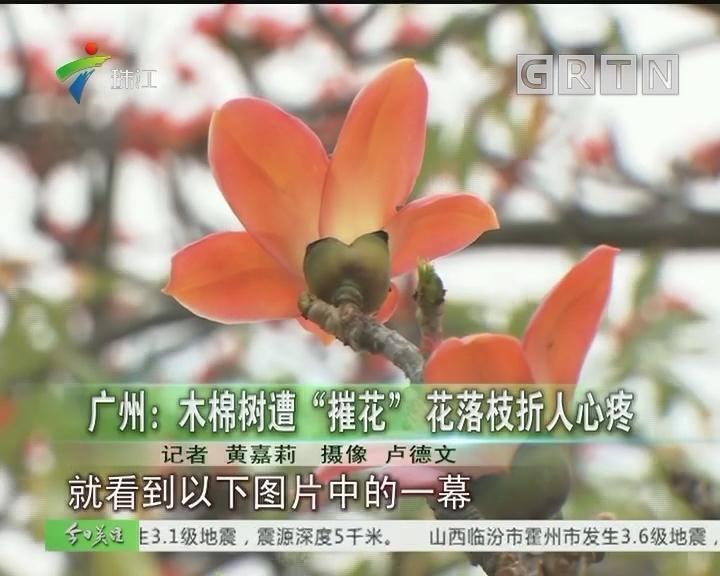 """广州:木棉树遭""""摧花"""" 花落枝折人心疼"""