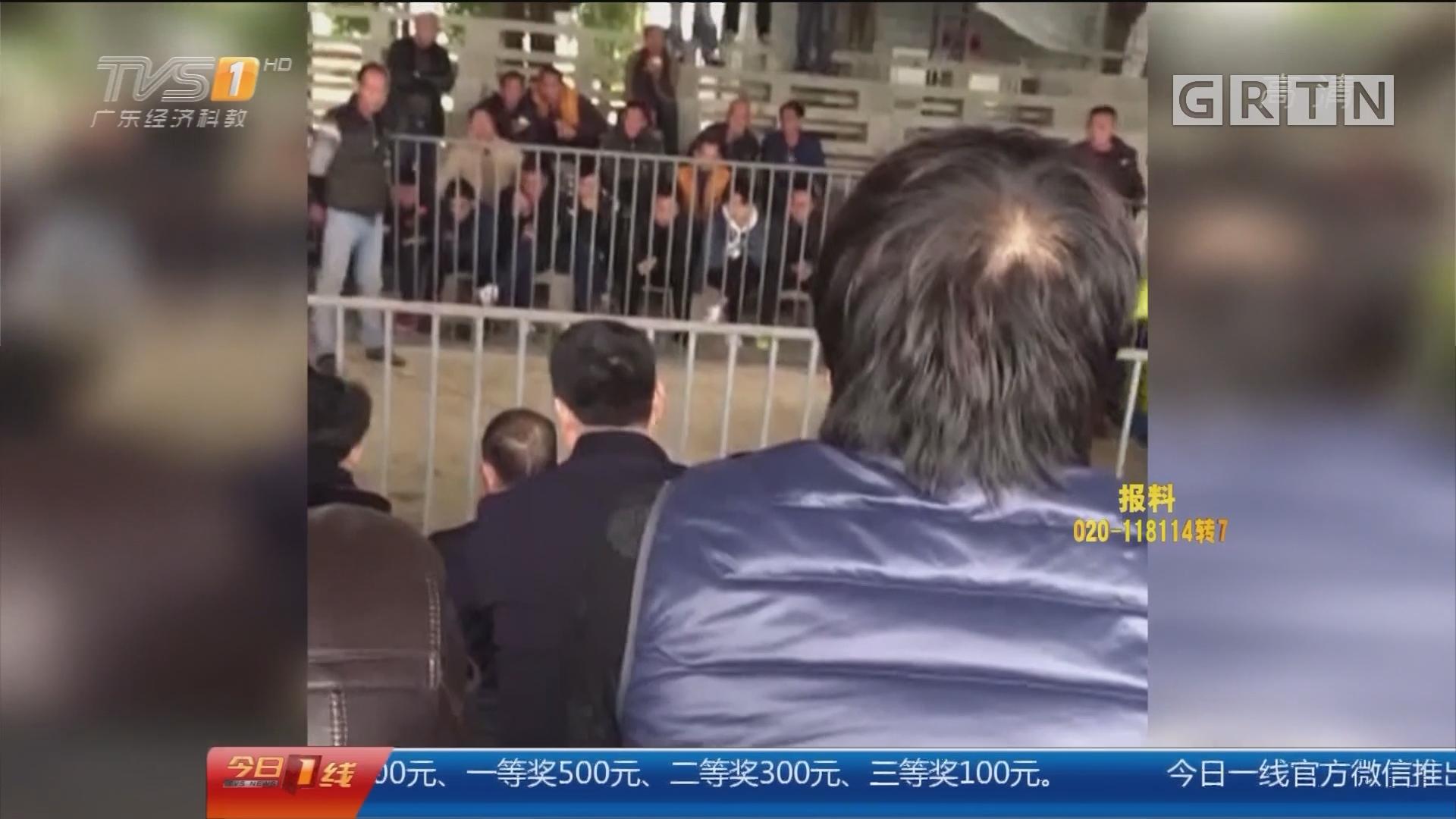 汕头澄海:老年娱乐场别有洞天 斗狗赌场暗藏其中