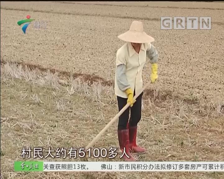 吴川:农田干旱难耕种 拟人工降雨