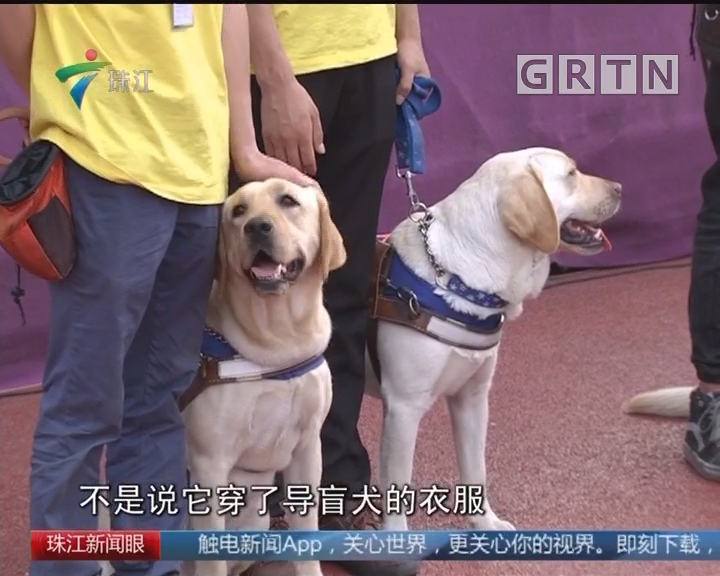 广州国际导盲犬节举行 公共服务逐步推进