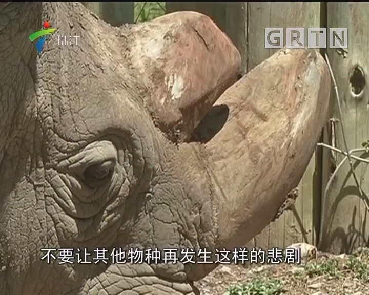 全球最后一头雄性北方白犀牛离世