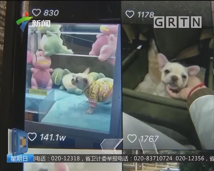 网红狗吸粉11万 不料主人账号被盗骗子索6000元