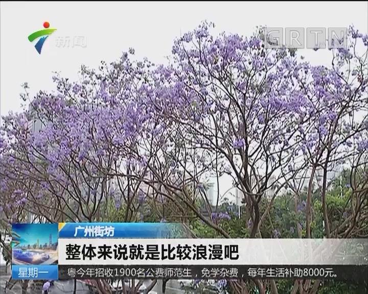 """广州:蓝花楹灿烂绽放 """"紫色仙境""""又来了!"""