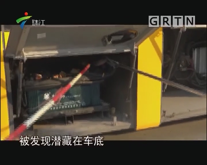 """中山:剧毒眼镜蛇蹿入校巴 消防员客串""""捕蛇者说"""""""