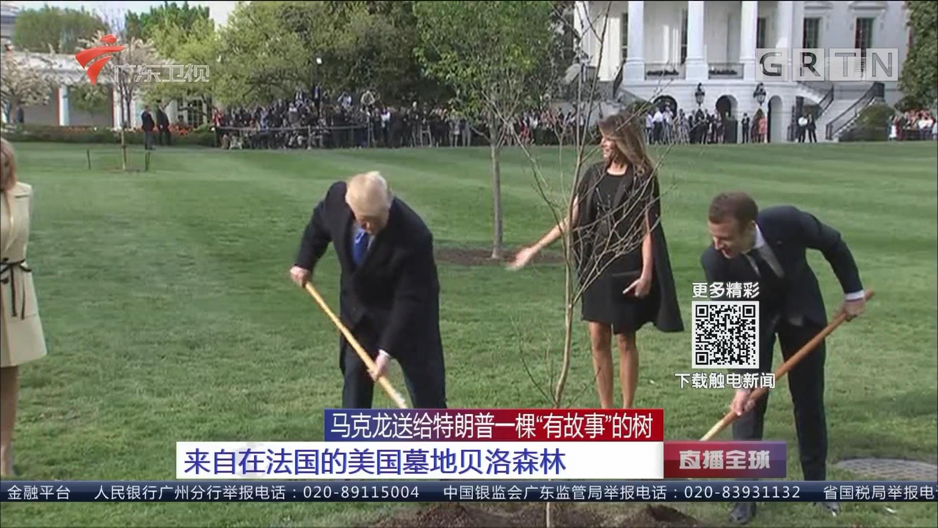 """马克龙送给特朗普一棵""""有故事""""的树 来自在法国的美国墓地贝洛森林"""